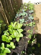Starting your Own Veggie Garden: Top Tips